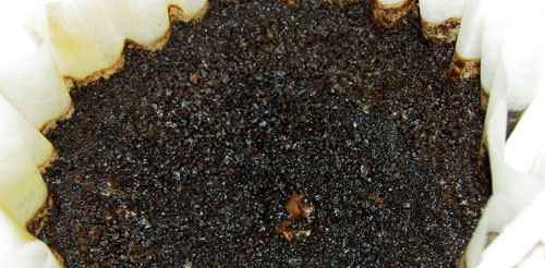 Using recycled coffee grounds in the garden for How to use coffee grounds in garden