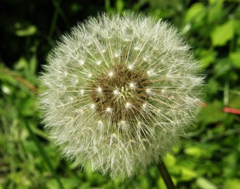 How to Keep Weeds Out of the Garden